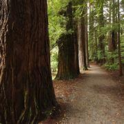 Il legno proveniente dagli alberi