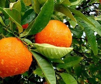 Nel Frutteto