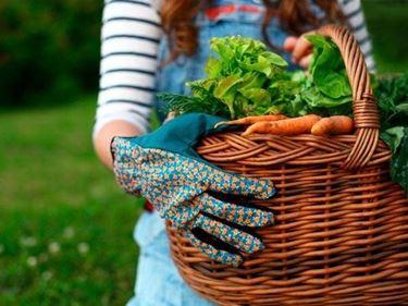 raccolta prodotti orto