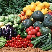 I prodotti dell'orto.