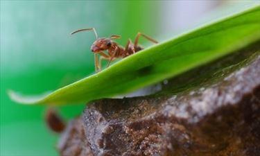 orto formiche