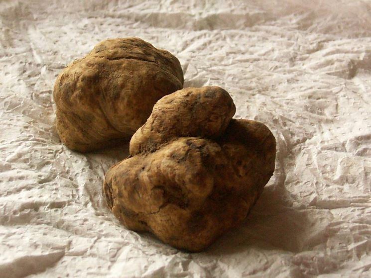tartufi raccolti