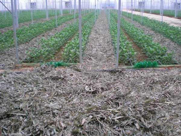 Fertilizzante Per Piante : Migliore concimazione per l orto coltivare
