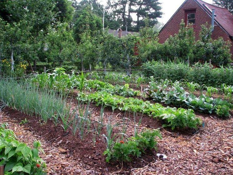 un esempio di orto di settembre