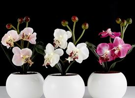 Come realizzare mini orchidee