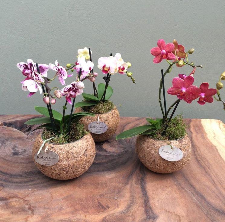Come realizzare mini orchidee cura orchidee consigli - Vasi per orchidee ...
