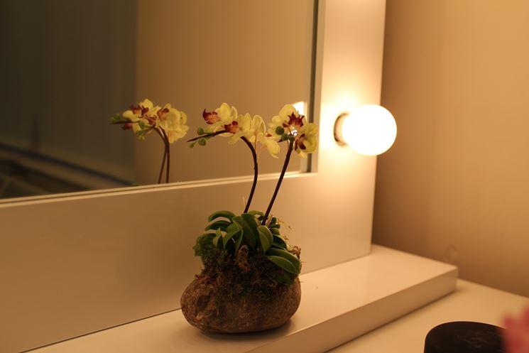 Come realizzare mini orchidee cura orchidee consigli for Orchidea foglie gialle