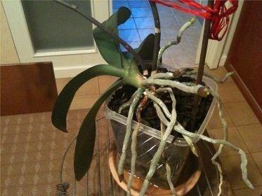 Come scegliere i vasi per orchidee cura orchidee ecco come scegliere i vasi per orchidee - Orchidee da esterno ...