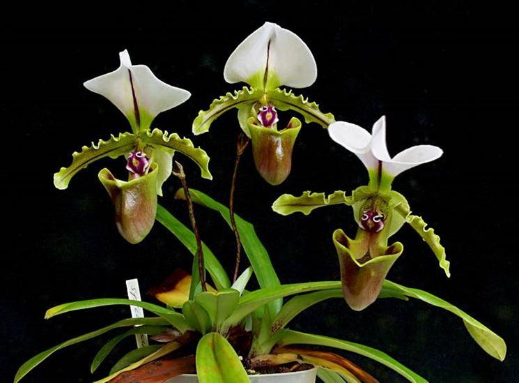 Виды Орхидей Топ7 популярных орхидей Фото
