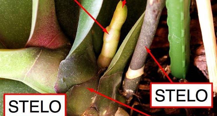 Strutture delle orchidee. Fonte: www.1.bp.blogspot.com.