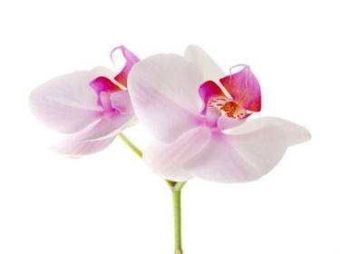 fiore orchidea<p />