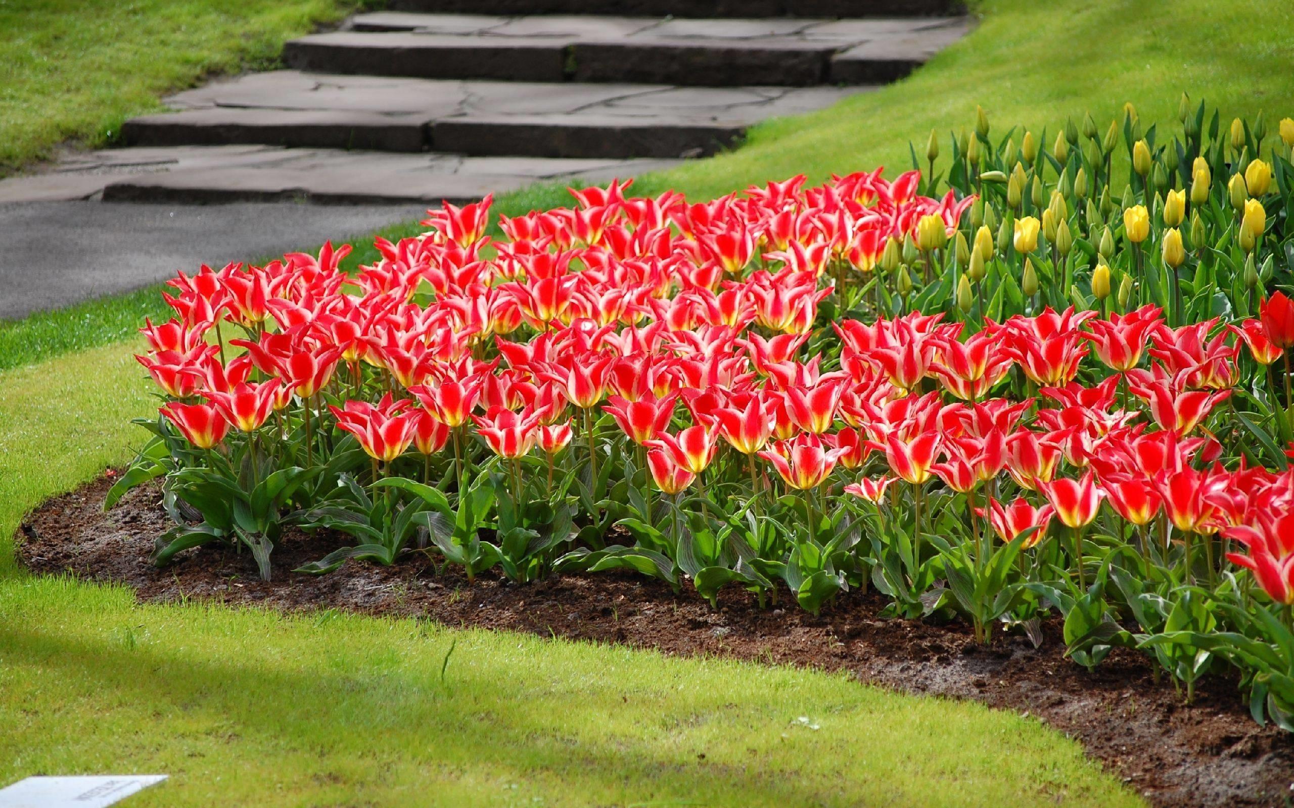 Fiori e piante cura piante appartamento come creare un for Piante da aiuola