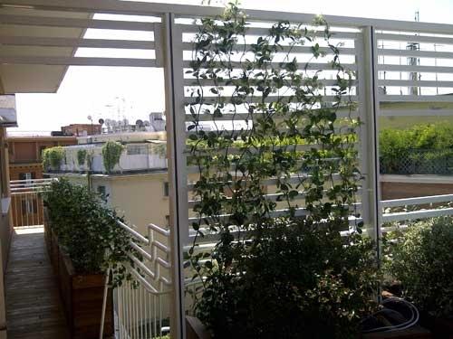 Stunning piante rampicanti terrazzo images design trends for Piante e fiori da appartamento