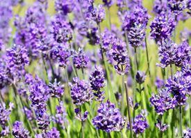 Le migliori piante aromatiche