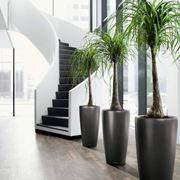 piante da appartamento1