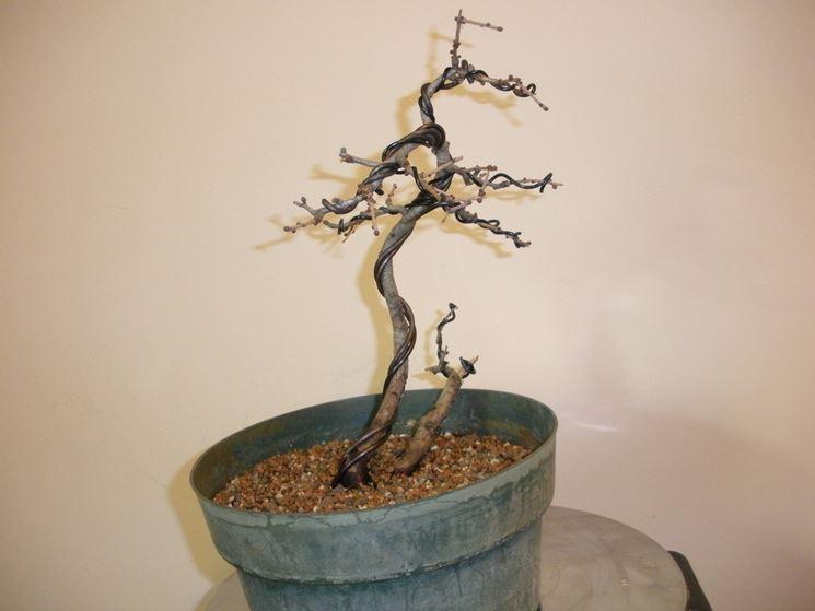 bonsai spoglio