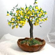 Bonsai limone cure