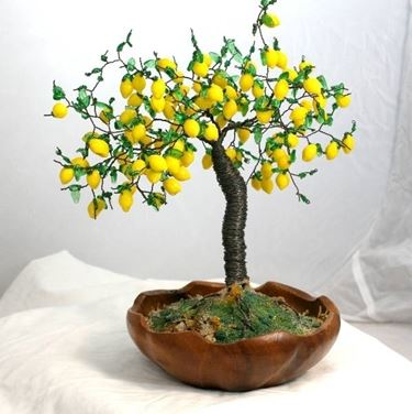 Bonsai limone cure