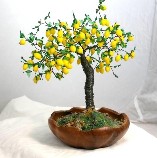 Come curare un bonsai di limone - Fare Bonsai - Curare un bonsai limone