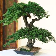 bonsai artificiale