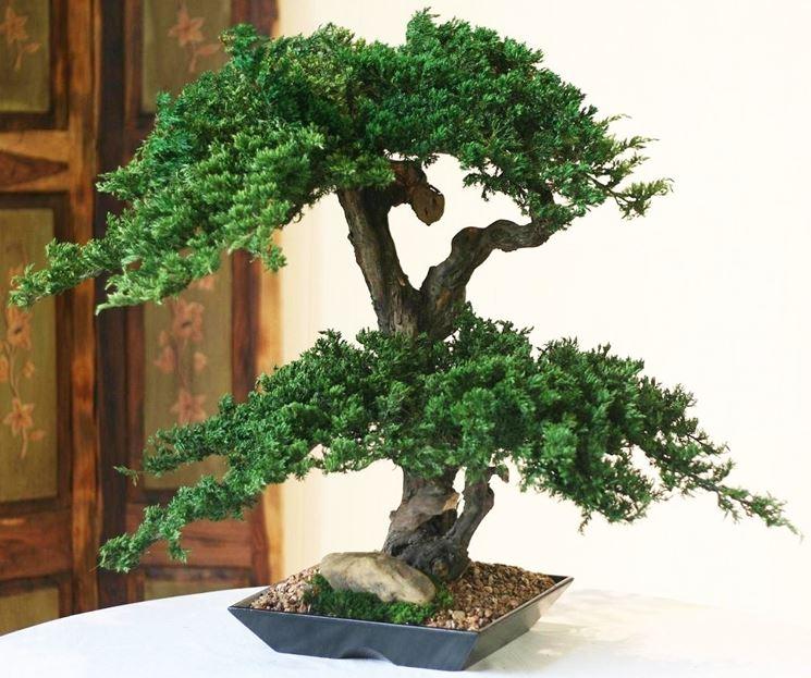 bonsai artificiale