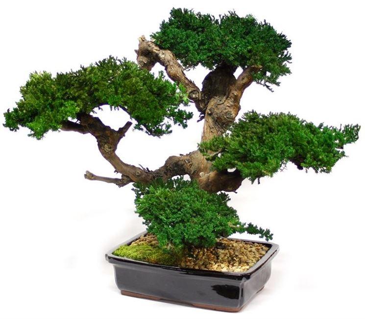bonsai finto