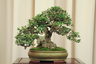Come preparare un terriccio per bonsai fare bonsai for Piante per bonsai