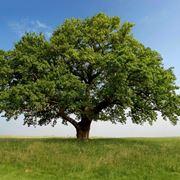 come creare un bonsai