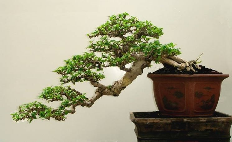 Bonsai stili