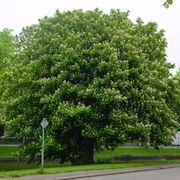 alberi latifoglie