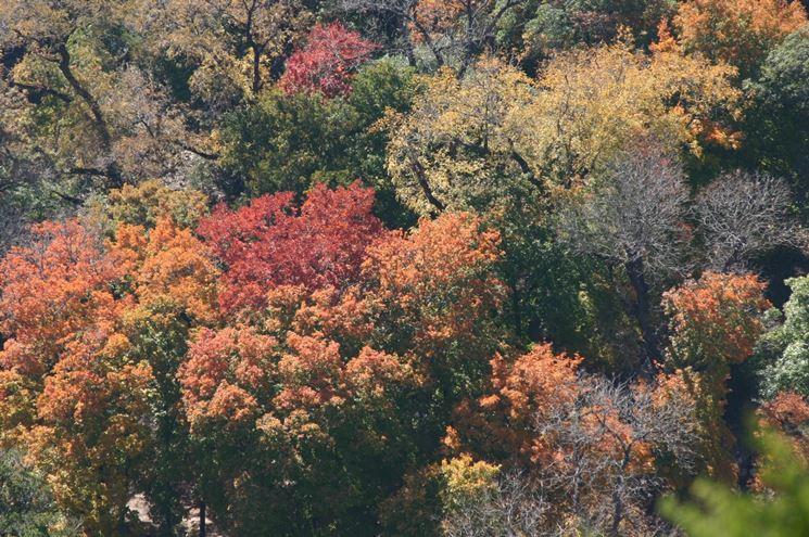 alberi caducifoglie coltivazione