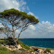 Alberi mediterranei