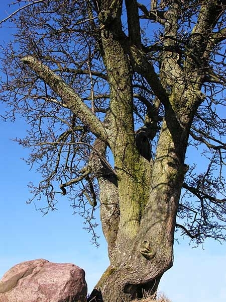 Come mai l 39 ulivo perde foglie gli alberi ecco come mai for Glicine bonsai prezzo