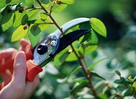 Come potare un albero