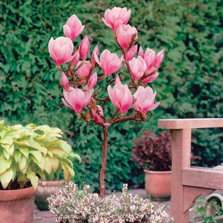 I migliori alberi da giardino a crescita rapida gli - Alberi da piantare in giardino ...