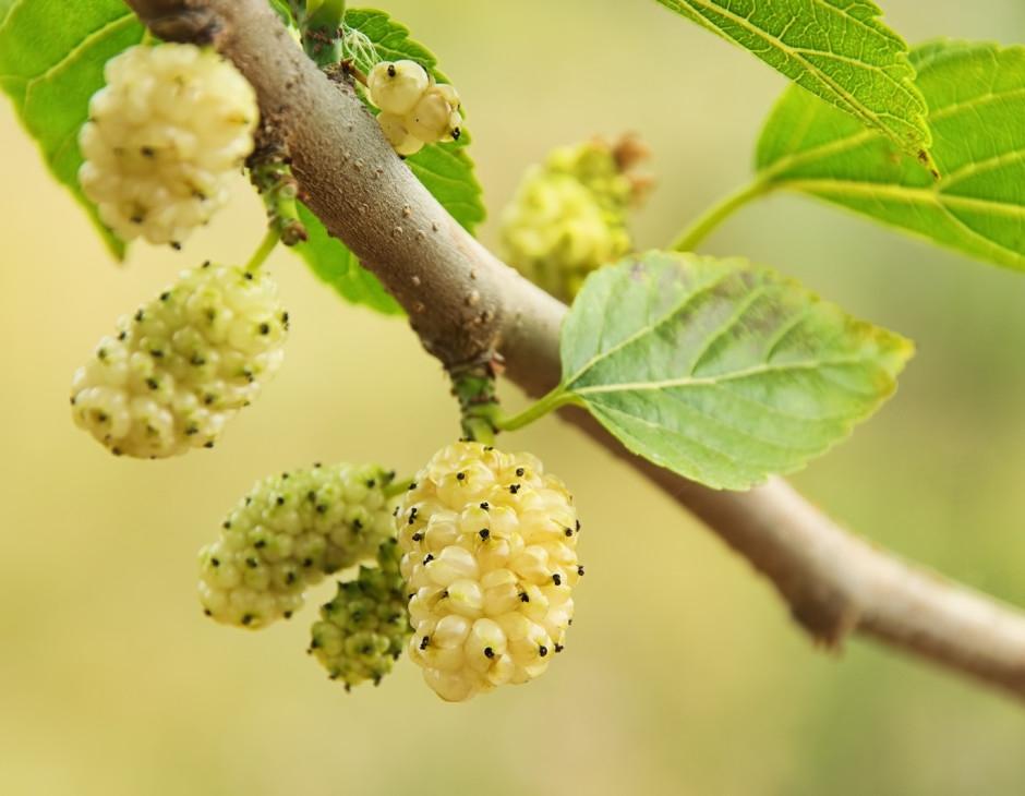 I migliori alberi da giardino a crescita rapida gli alberi ecco i migliori alberi da - Alberi da giardino consigli ...