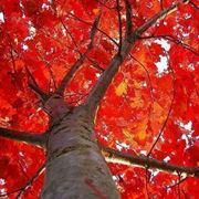 alberi crescita veloce