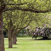 I migliori alberi da giardino a crescita rapida gli for Alberi a crescita veloce