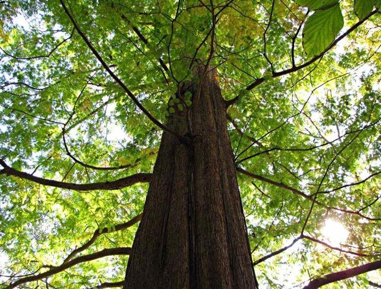 Alberi da giardino piccoli latest veduta with alberi da - Alberi particolari da giardino ...