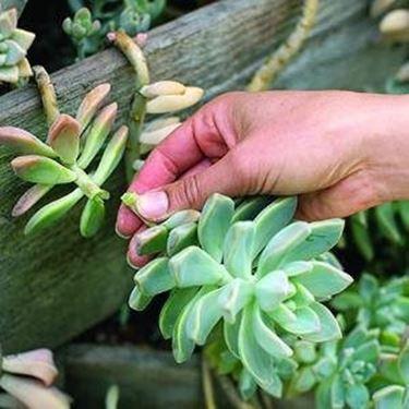 Coltivare piante grasse da esterno le piante grasse piante grasse da esterno - Piante grasse da esterno in inverno ...