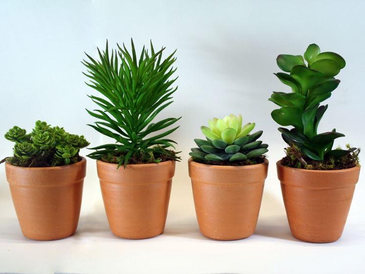 Coltivare piante grasse da esterno le piante grasse for Piante da esterno