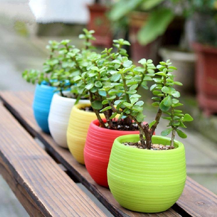 Coltivare piante grasse da esterno le piante grasse - Piante grasse da esterno pendenti ...