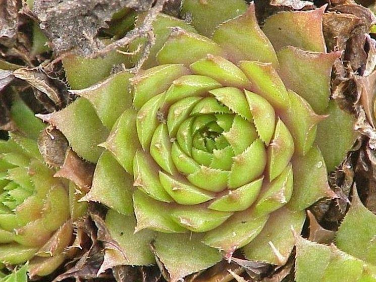 Una pianta grassa d'appartamento