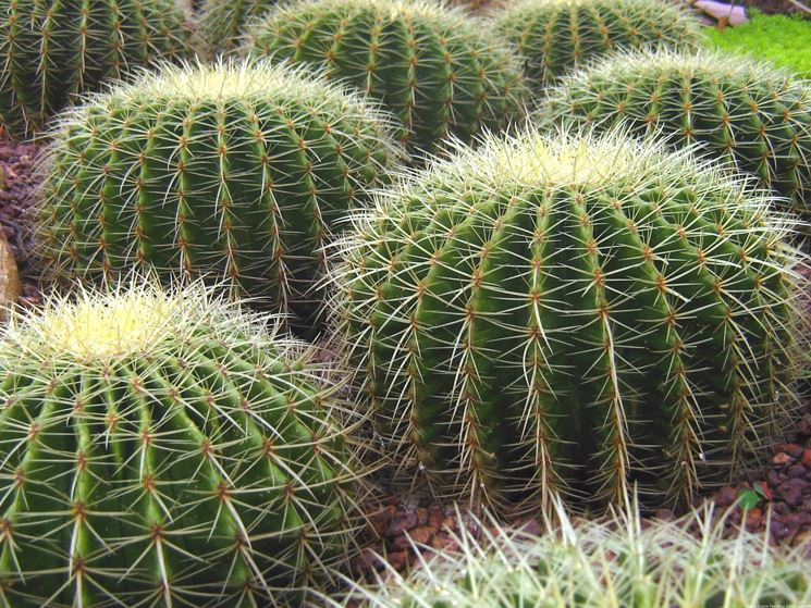 Una pianta grassa necessita di molto sole