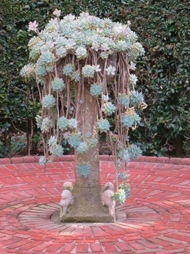grasse rampicanti ornamentali