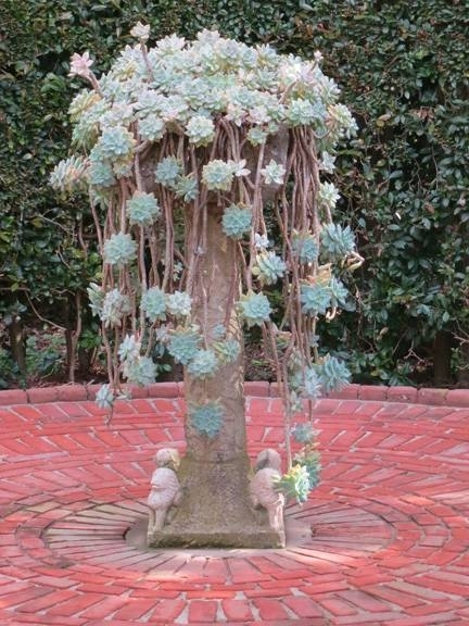 Coltivare piante grasse rampicanti le piante grasse for Piante grasse ornamentali