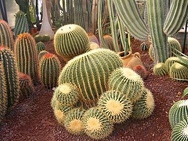 Come coltivare piante grasse da giardino le piante for Giardino roccioso con piante grasse