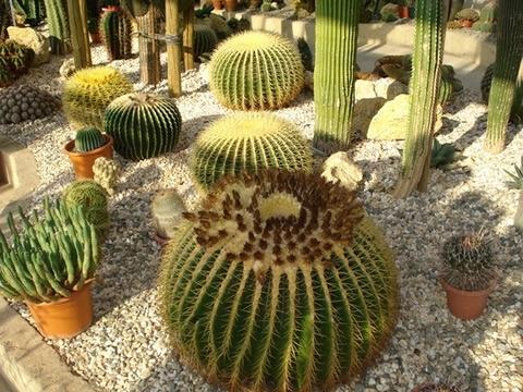 Come coltivare piante grasse da giardino le piante for Piante grasse fiorite da esterno