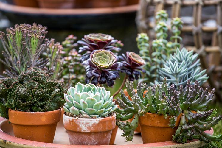 innaffiare piante grasse