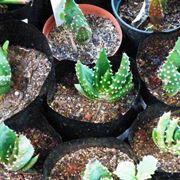 piante grasse diverse